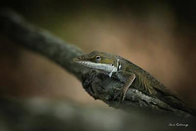 Photograph - Pure Deception Lizard Wildlife Art by Reid Callaway