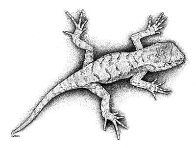 Drawing - Lizard by Scott Woyak