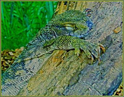 Digital Art - Lizard Snoozing by Mindy Newman