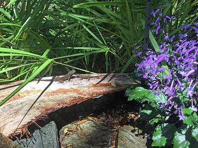 Lizards In The Garden Art Print by Aimee L Maher Photography and Art Visit ALMGallerydotcom