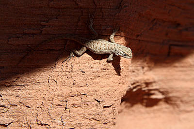 Adventure Photograph - Lizzard In Canyonlands by Pierre Leclerc Photography