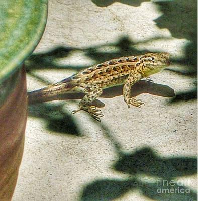 Photograph - Lizzie Lizard Stance by Susan Garren