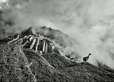 Photograph - Llama In Machu Picchu by Jaime Quiroz Tirado