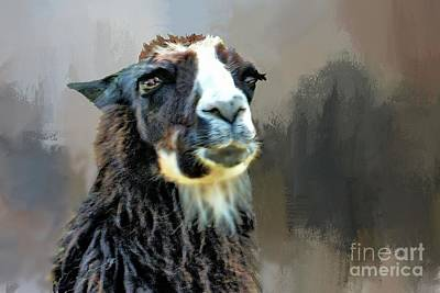 Photograph - Llama On Black by Janette Boyd