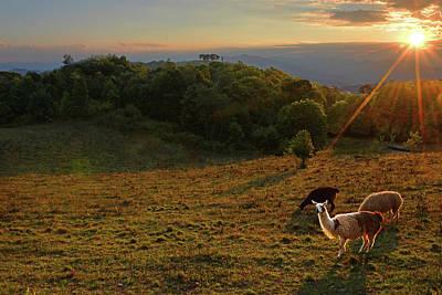 Photograph - Llama Sunset by Alan Lenk