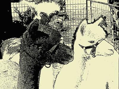 Llama Mixed Media - Llamas Black And Ivory Photo Art by Janice Knauss