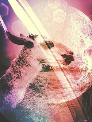 Llamas In Space Art Print by Madison Adams