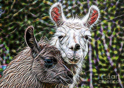 Llama Mixed Media - Llamas by Marvin Blaine