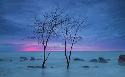 Photograph - Lm Trees by Dave Chandre