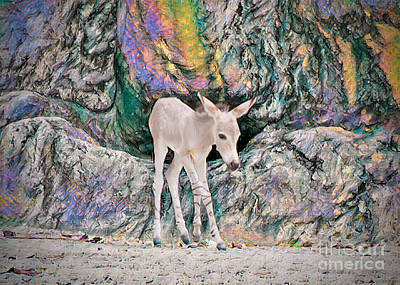 Painting - Lone Foal by Judy Kay