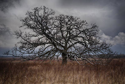 Photograph - Loan Oak II by Dan Hefle