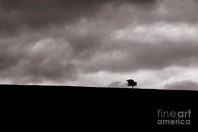 Photograph - Lone Tree by Diane Macdonald