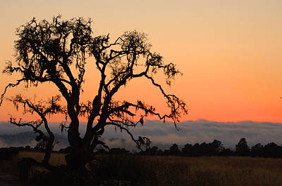 Photograph - Loan Tree Overlooking Fog by Jill Reger