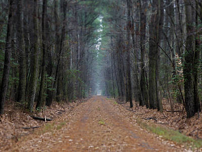 Photograph - Loblolly Lane by Robert Geary