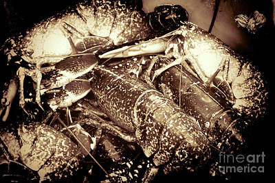 Photograph - Lobster Catcher by Baggieoldboy