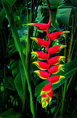 Photograph - Lobster Claw Flower by Carolyn Derstine