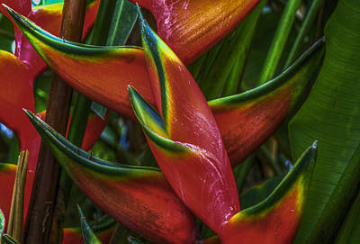 Lobster Claw Photograph - Lobster Claws by Debra and Dave Vanderlaan