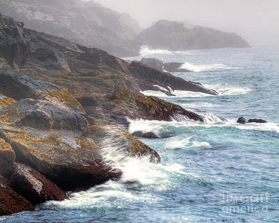 Photograph - Lobster Cove by Tom Cameron