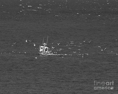 Photograph - Lobster Fishing by Alana Ranney