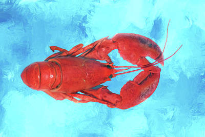 Photograph - Lobster On Turquoise by Nikolyn McDonald