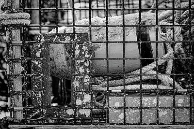 Photograph - Lobster Trap #2 by Stephen Stookey