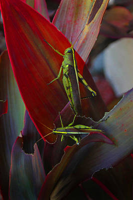 Photograph - Local Locust Munching by Joseph G Holland