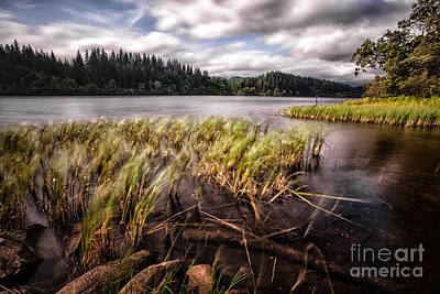 Loch Ard From The Reed Beds Landscape Art Print by John Farnan