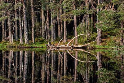Photograph - Loch Garten by Arterra Picture Library