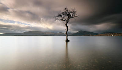 Photograph - Loch Lomond Lone Tree by Grant Glendinning