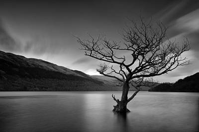 Photograph - Loch Tree by Grant Glendinning