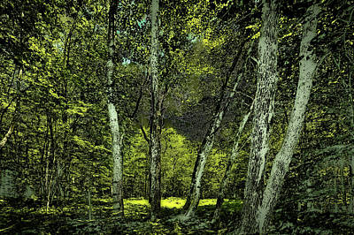 Photograph - Lock And Dam Forest by David Patterson
