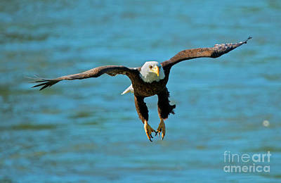 Talons Photograph - Locked On by Mike Dawson
