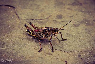Photograph - Locust Visit by Stefanie Silva