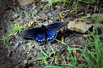 Photograph - Lodi Lake Butterfly by Joyce Dickens