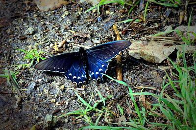Photograph - Lodi Lake Butterfly by Joyce Dickens