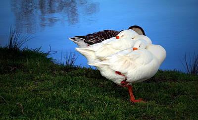 Photograph - Lodi Lake Geese by Joyce Dickens