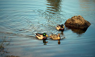 Photograph - Lodi Lake Mallards by Joyce Dickens