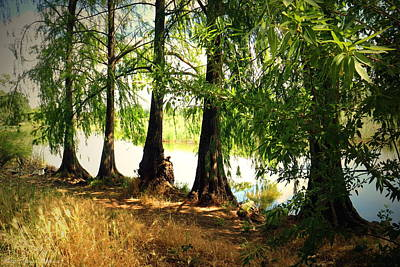 Photograph - Lodi Lake Sentinels by Joyce Dickens