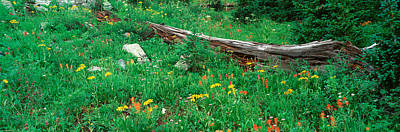 Ouray Photograph - Log Amid Alpine Flowers, Ouray, Colorado by Panoramic Images