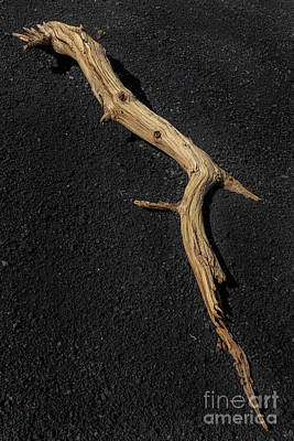 Flagstaff Wall Art - Photograph - Log And Lava Rock by Jeremy Dufault