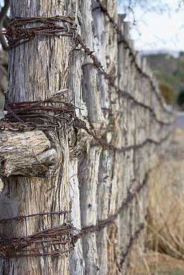 Log And Wire Fence Art Print by Phyllis Denton