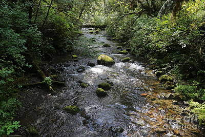 Photograph - Log Bridge In Washington Rainforest by Carol Groenen
