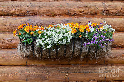 Photograph - Log Cabin Flower Planter by Catherine Sherman