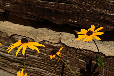 Photograph - Log Cabin Flowers by Michael McGowan