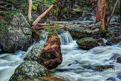 Photograph - Log In Bridalveil Creek In Yosemite by Terry Garvin