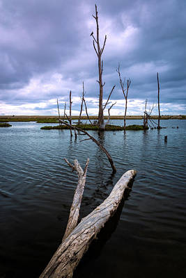 Photograph - Log In The Water by Rick Strobaugh