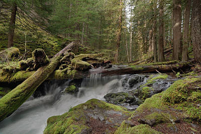 Stream Photograph - Log Jam At Panther Creek Falls by David Gn