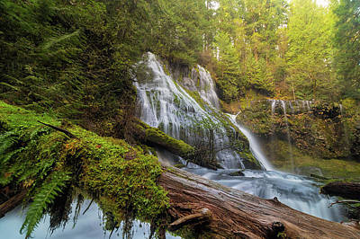 Photograph - Log Jam By Panther Creek Falls by David Gn