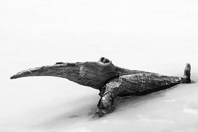 Photograph - Log Monster by Michael Hubley