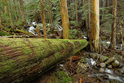 Forest Floor Photograph - Log Over A Stream by Jeff Swan